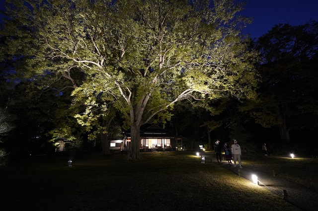rikugien2-1 六義園「紅葉と大名庭園のライトアップ」2019年動画で紹介